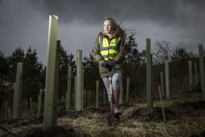 a-group-of-six-mature-trees-will-sequester-around-1-tonne-of-carbon
